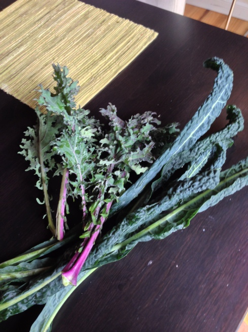 Never in my life did I imagine I would be posting pictures of kale from my garden...how did I get here??